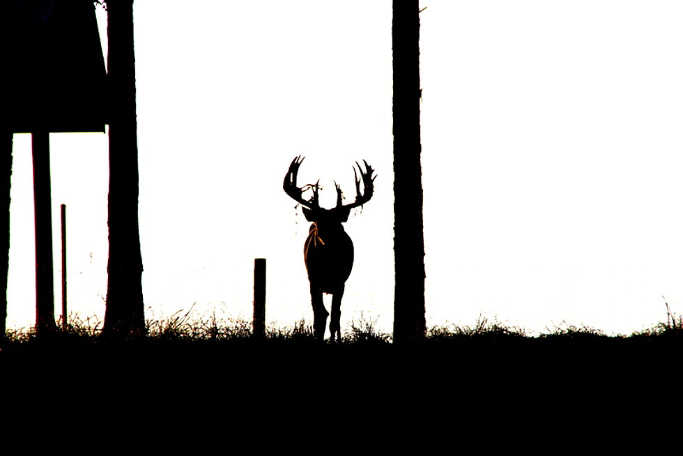 Davis whitetails for Alabama lifetime hunting and fishing license