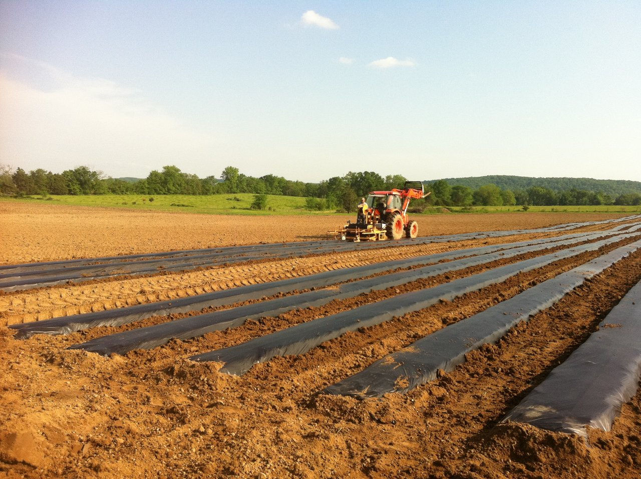 STARTING THE VEGETABLE FIELDS