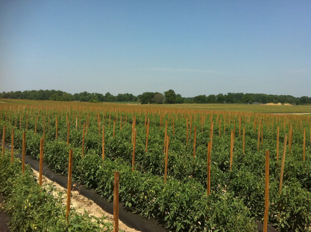 MISSOURI VEGETABLE FIELDS
