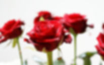 Rose Mortuary Desert Hot Springs Funeral Home and Palm Desert Funeral Home Cremation and Burial