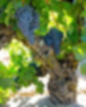 old vine priorat.jpg