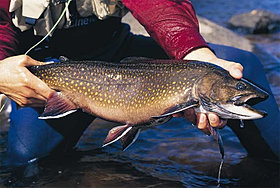 BROOKTROUT 1