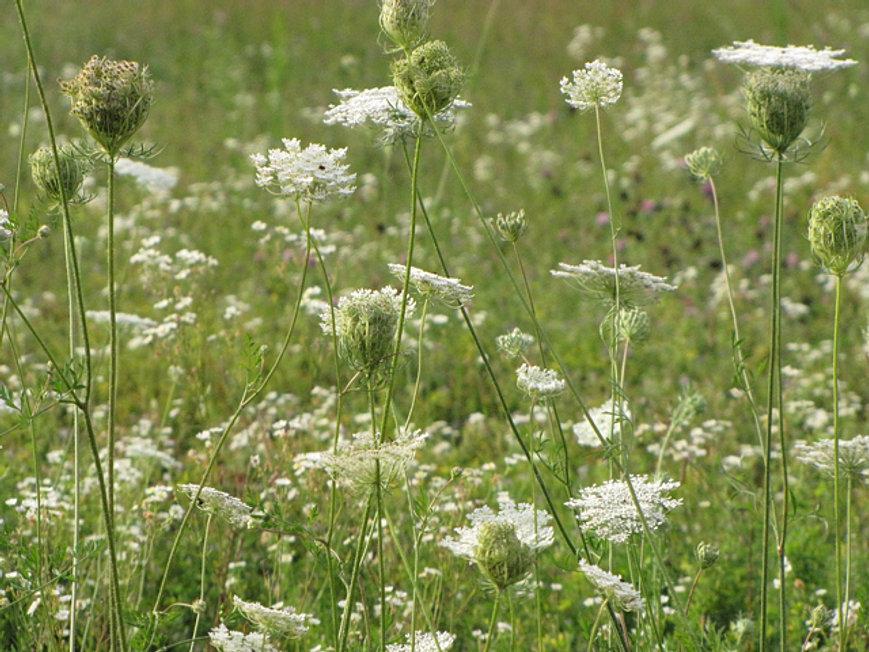 Mysite Flowers Botanicals