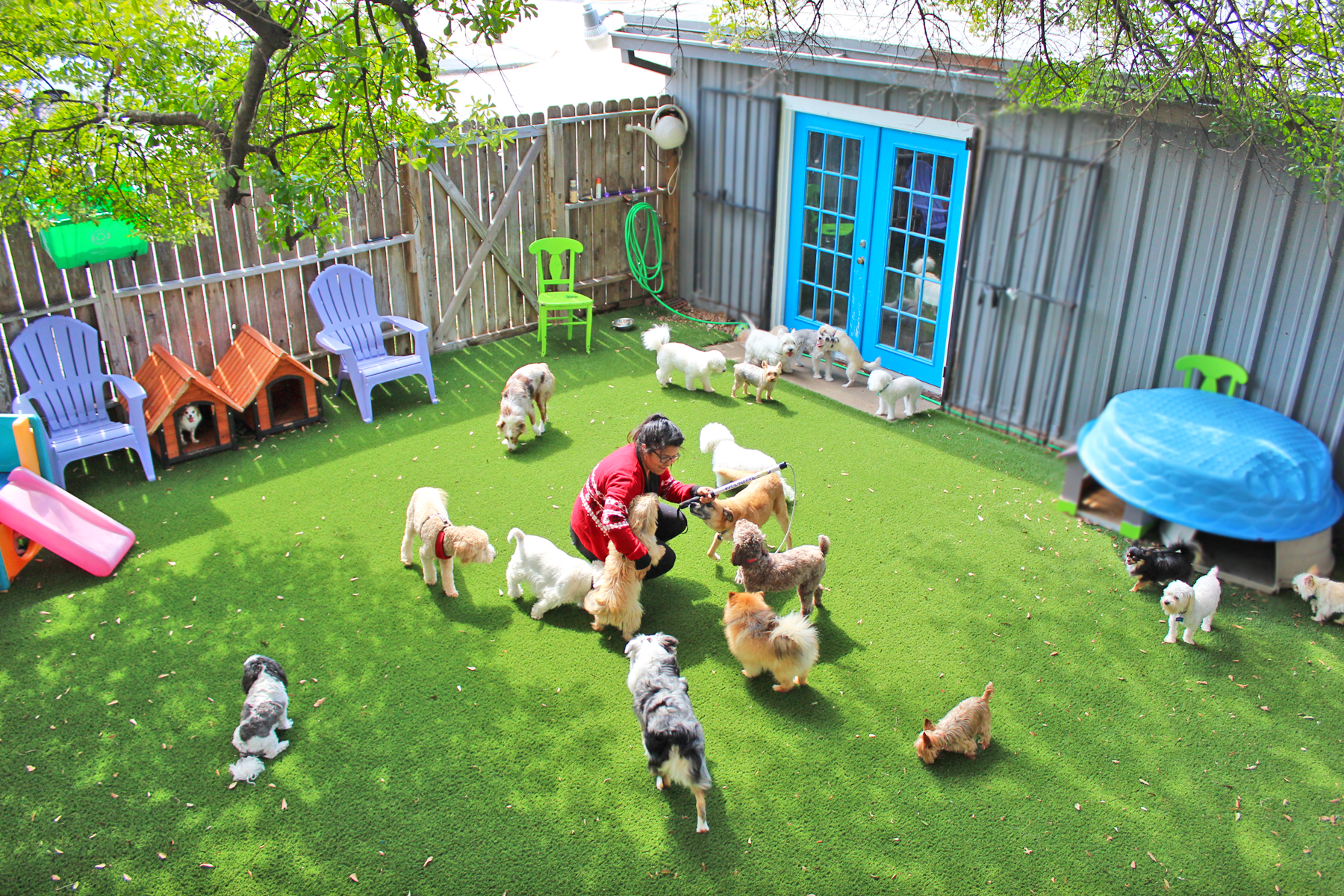 Bldhtx for Best little dog house in texas