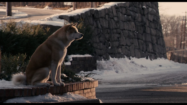 Can anyone suggest some influential films that have dogs in them?