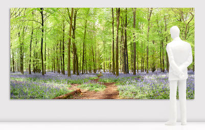 David_Anthony_Hall- Bluebell-Woo.jpg