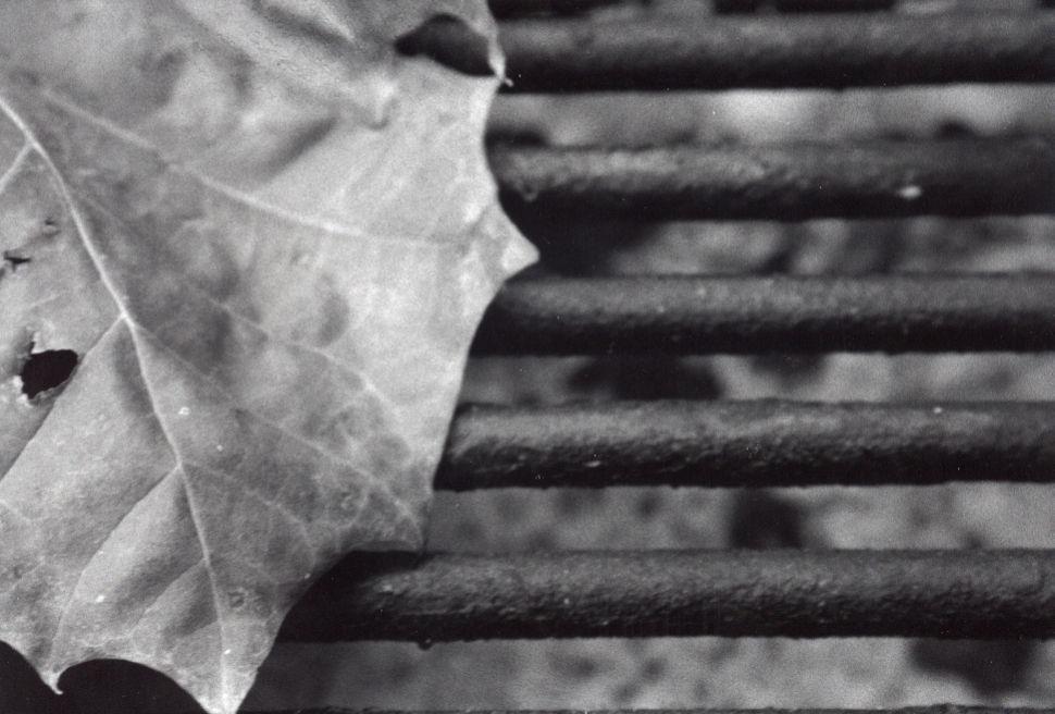 abel becker leaf