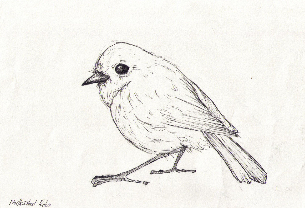 Robin Bird Sketch Sketch Coloring Page