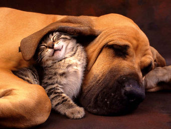 free-images-of-dogs-and-cats-2[1]