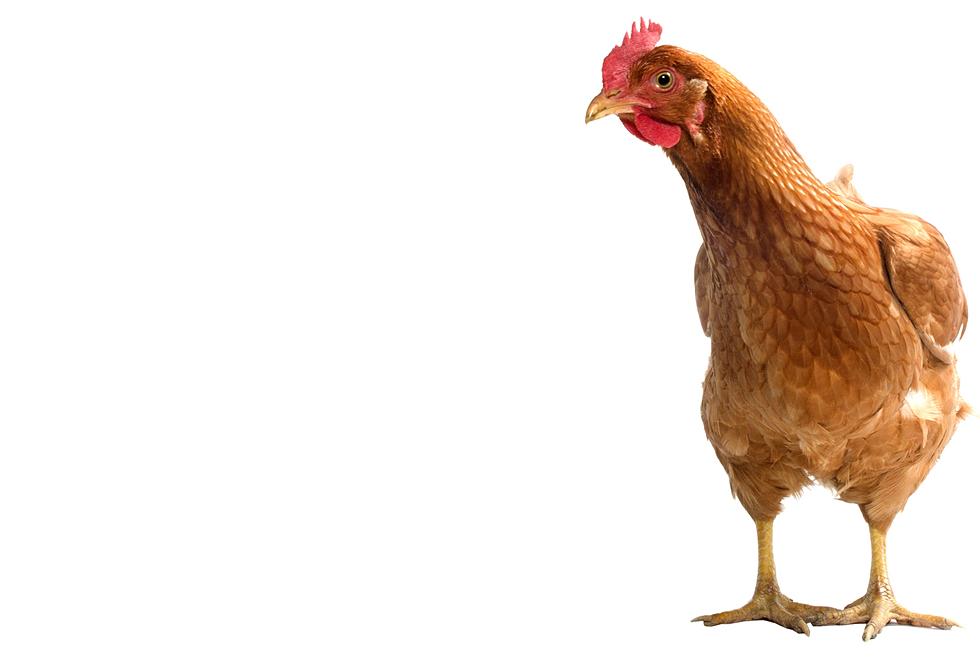 Poulailler pour 1 poule poulailler for Prix des poules pondeuses