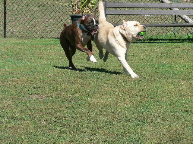 Dog Grooming Cornwall Ontario