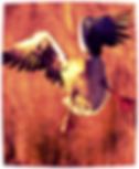 volo pappagalli