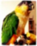 alimentazione pappagalli