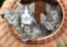 cat-1209743_1920.jpg
