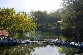 Elegant Lake/Pond