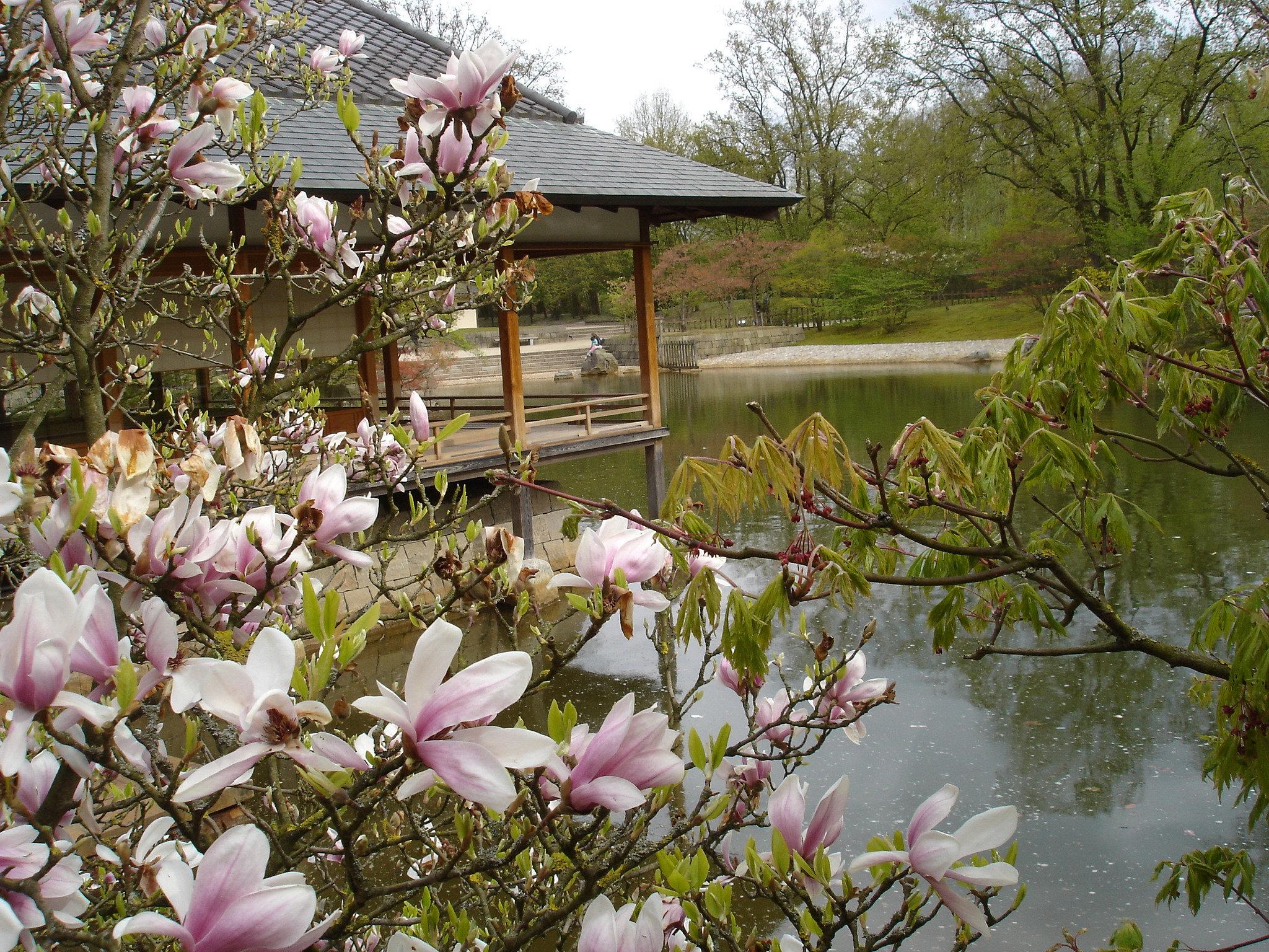 Cercle horticole de carlsbourg jardin japonais hasselt 13 for Jardin japonais hasselt 2016