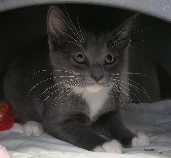rescue kittens #10
