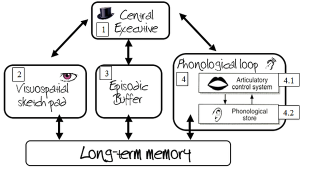 Memory The Working Memory Model Acpsychology