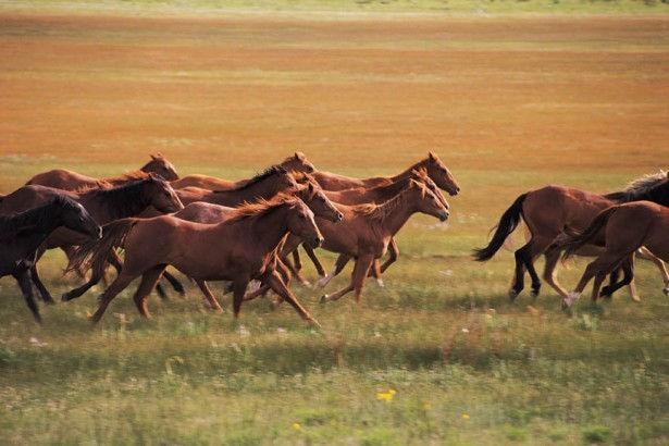 Wild-Horses-Colorado-615x410.jpg