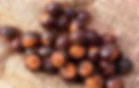 grãos de guaraná.jpg