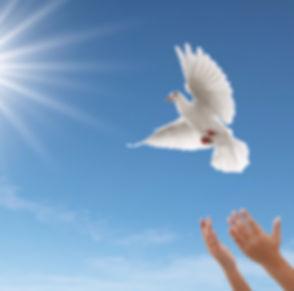 releasing-dove_edited_edited.jpg