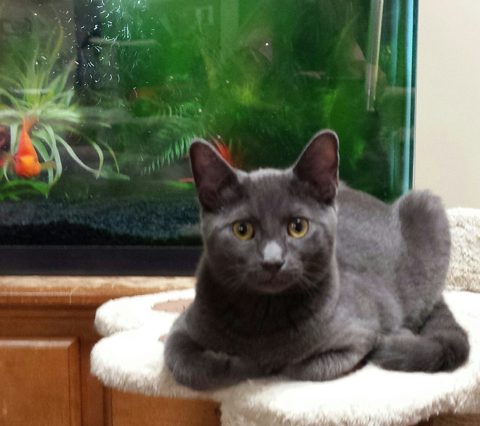 Home Sweet Home Animal Rescue of Long Island Adopted Cats