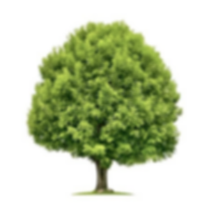 2020.05.23 Tree.png
