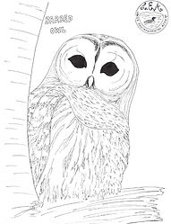 bird coloring pages-1.jpg