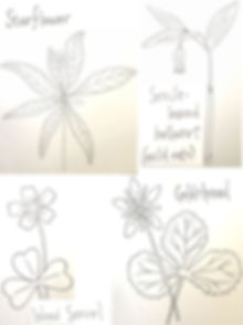 wildflower drawings.jpg