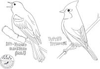 bird coloring pages-2.jpg