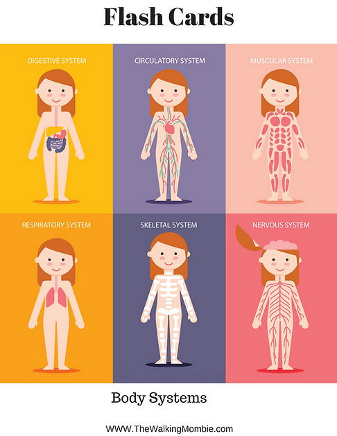 Anatomy Of The Human Body Free Printables For Kids The Walking