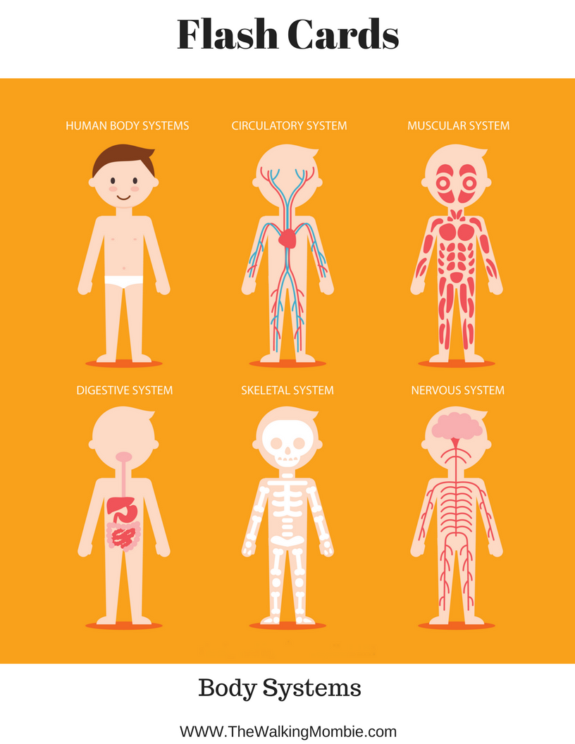 Anatomy Of The Human Body  Free Printables For Kids