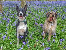Dog Training and Husbandry
