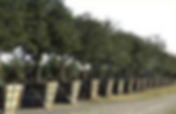 Omaha Tree Planting | Omaha Tree Service | Omaha Tree Removal | Tree Lawn Medic - Omaha NE
