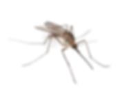 Omaha Mosquito Control | Exterminator | Mosquito Misting System | CoastalMister | Tree Lawn Medic - Omaha NE
