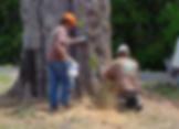 Omaha Tree Removal | Omaha Tree Service | Omaha Tree Care | Omaha Arborists | Tree Lawn Medic - Omaha NE