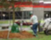 Omaha Tree Trimming | Omaha Tree Pruning | Omaha Tree Cutting | Tree Lawn Medic - Omaha NE