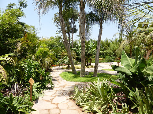 Croco parc d 39 agadir ouverture du nouveau parc d for Boulevard du jardin botanique 20 22