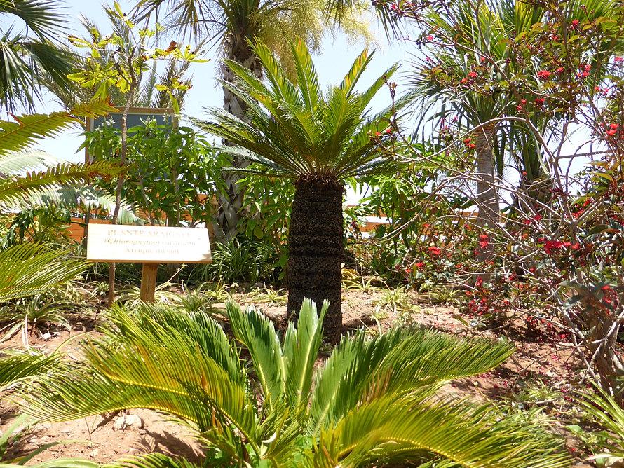 Croco parc agadir for Boulevard du jardin botanique 20 22