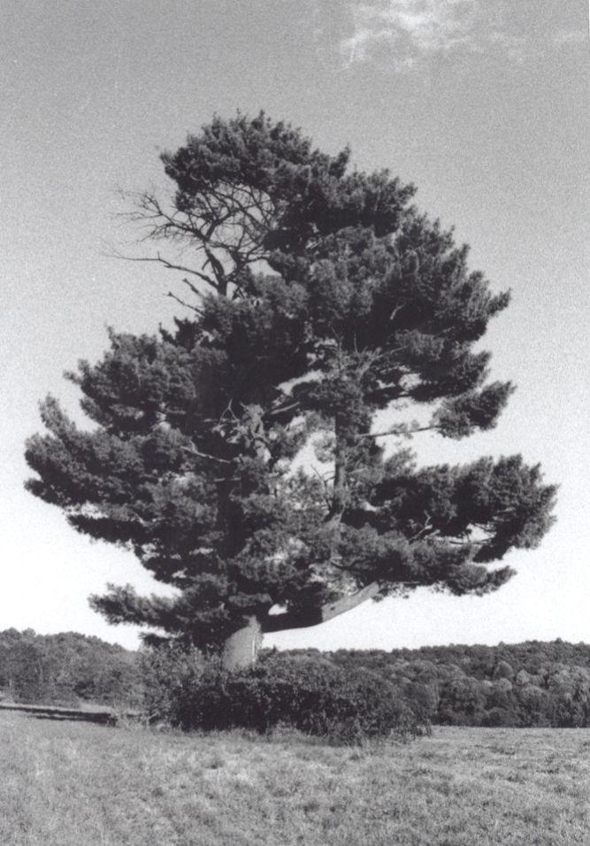 abel becker tree