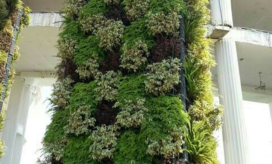 Vertical gardens india for Gardening tools in bangalore