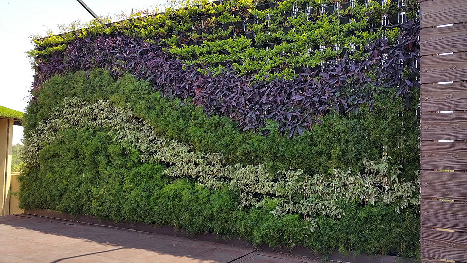 Vertical gardens india Green walls vertical planting systems