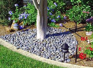 Pebbles   By Sanjay Nursery Plant N