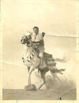 horseOriginal.jpg