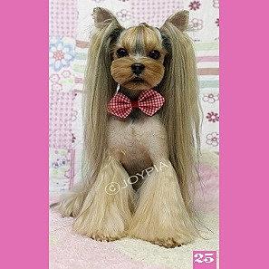 Christines Pet Grooming Japanese Style Yorkie Jpg
