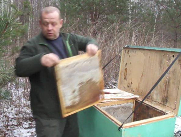 пчеловодство как бизнес в россии