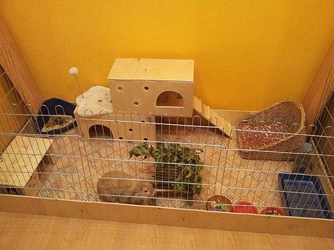 Клетки для кролика своими руками для квартиры