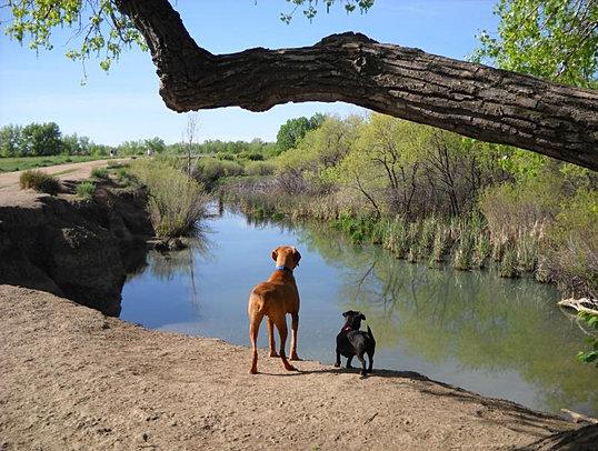 Dog Walking Denver Co
