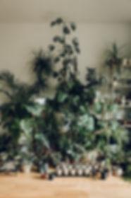 The+Haarkon+indoor+garden.jpg