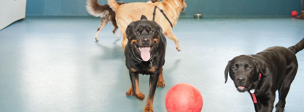 Dog Training Sheffield